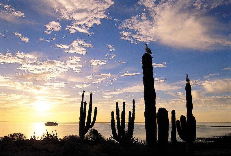 Mex_baja-desert_blog1